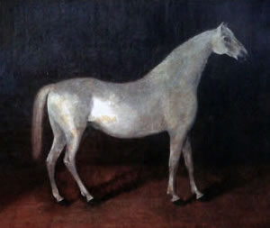 The grey Arabian stallion Smetanka is the ancestor of Orlov Trotters.