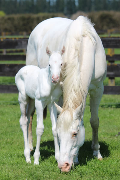The Opera House and her new foal.