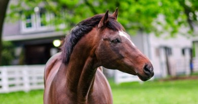 Cigar has died at the age of 24 following neck surgery.