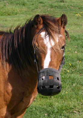 A horse at pasture wearing a grazing muzzle.