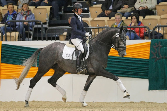 Top priced lot at the 2014 Trakehner Market was Hopkins, who fetched €100,000.