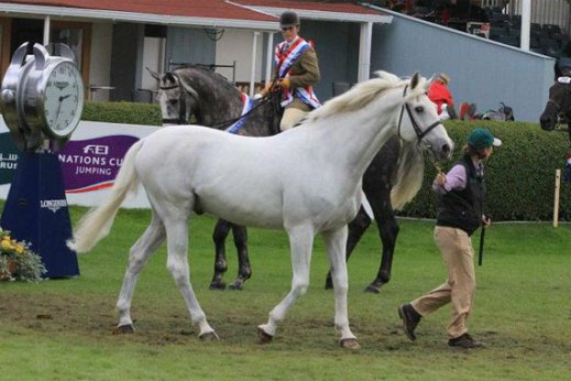 Cruising at the Royal Dublin Horse Show earlier this year at the age of 29.