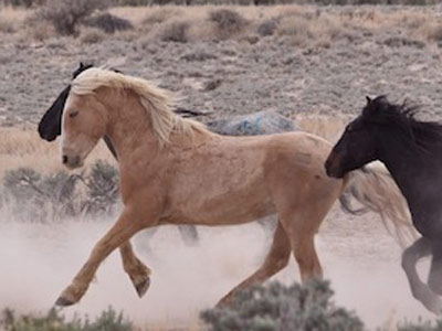 166 wild horses in Nevada given their freedom