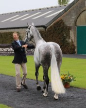 Best Tail of the Day went to Nick Gauntlett's Carden Earl Grey