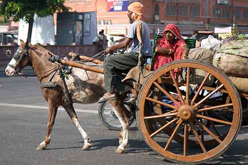 A working horse with its owner in Jaipur, India. Photo: Dr Becky Whay