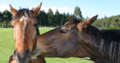 Evidence of cats, dogs and horses being exposed to Hepatitis E revealed in Dutch study