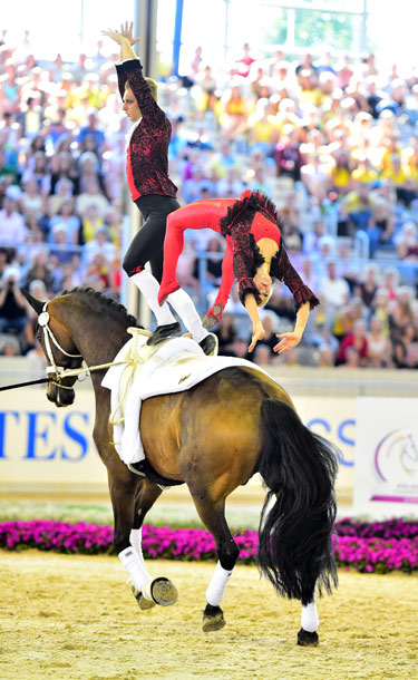 In the study, vaulting horses showed the quietest profiles when released and were less fearful when led over an unknown obstacle.