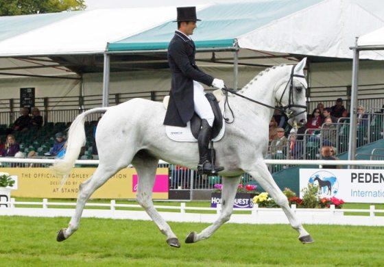 34th: Jonathan Paget (NZL) on Shady Grey