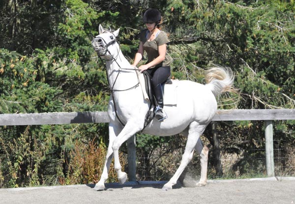 British research has shown that martingale use significantly reduced rein tension and resulted in more consistent rein tensions applied by novice riders.