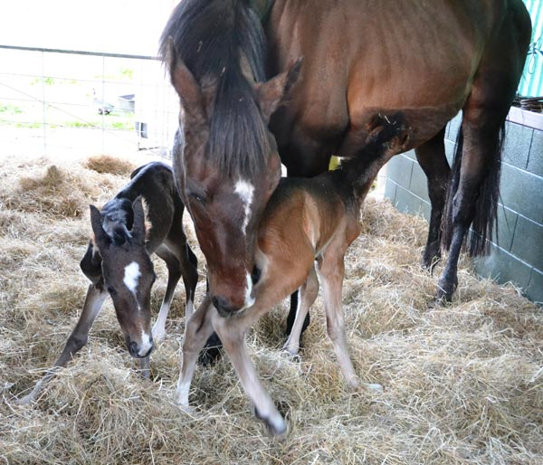 The twins at 48 hours old.