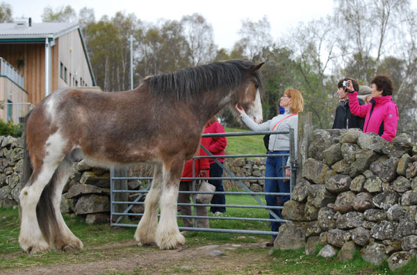 A star is born: Digger is fronting a new TV campaign for World Horse Welfare's Adopt-A-Horse Scheme.