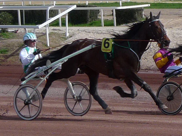 The Standardbred is the best-known harness racing breed. Photo: Historicair GFDL CC BY-SA 3.0 via Wikimedia Commons