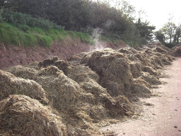 Spreading manure on land may be contributing to increased antibiotic resistance in soil.