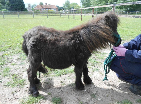 Peg was only a few months old when she was taken into care. Photos: World Horse Welfare
