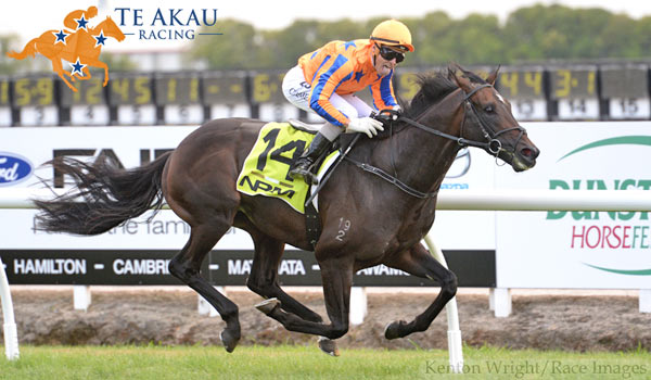 There are big travel plans for leading New Zealand three-year-old Xtravagant , if he win the $750,000 Australian Guineas on March 5.