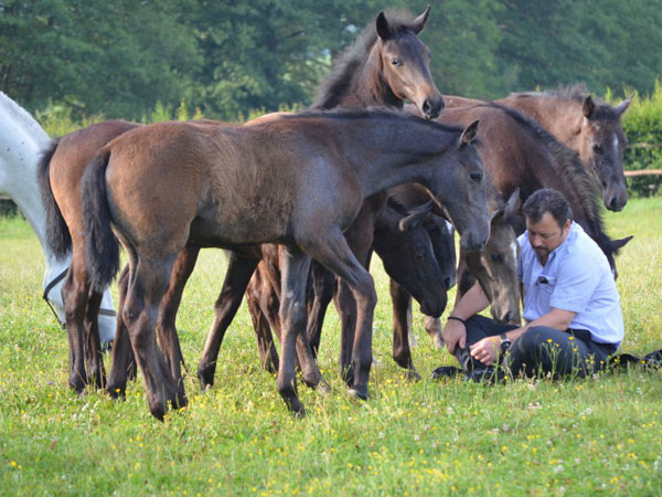 The lipizzaner stud farm at Piber in Austria has received aUNESCO cultural heritage award.