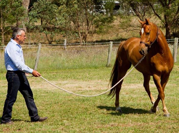 work in a small area and teach your horse to walk an exact circle, at an exact speed.