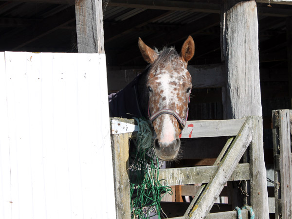 Daily activity around the stables will keep your horse amused - for at least part of the day.
