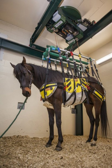 The equine lift in use. Itholds the potential to help horses recover more easily from injuries.