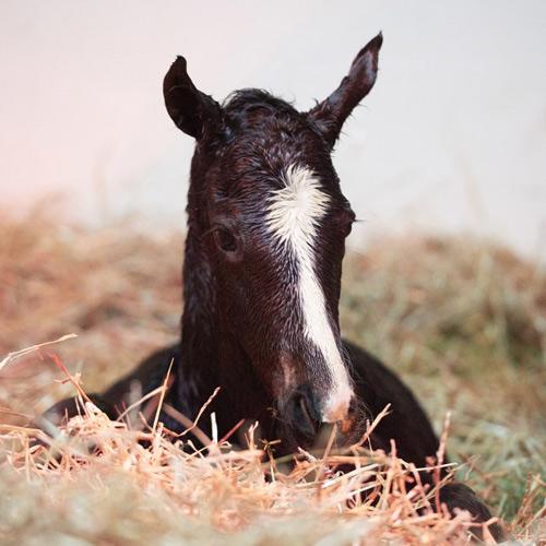 Zenyatta's 2016 colt by War Front died at three days old.