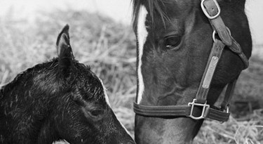 Zenyatta and her War Front foal on Sunday night.