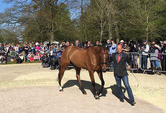 Michael Jung and La Biosthetique Sam at the first horse inspection at Badminton.
