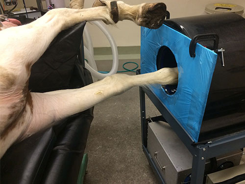 UC Davis' new portable PET scanner is the first of its kind to be used to image horses.