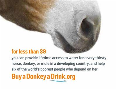 donkey-drink