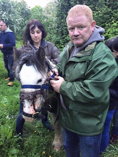 Gerry was successfully tranquilised and was able to be removed from the 100-acre field. Photos: My Lovely Horse Rescue