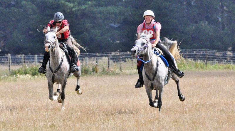 gallop-800-445