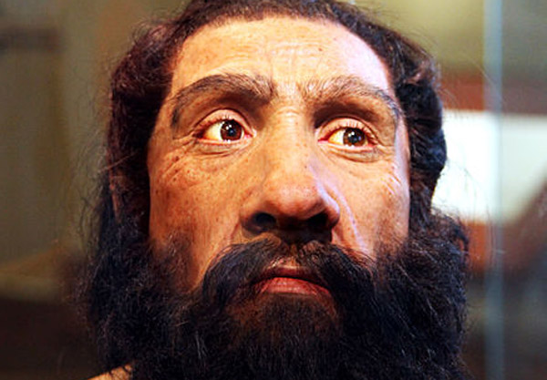 A model of an adult Neanderthal male head and shoulders on display in the Hall of Human Origins in the Smithsonian Museum of Natural History in Washington DC. Photo: Tim Evanson CC BY-SA 2.0 via Wikimedia Commons
