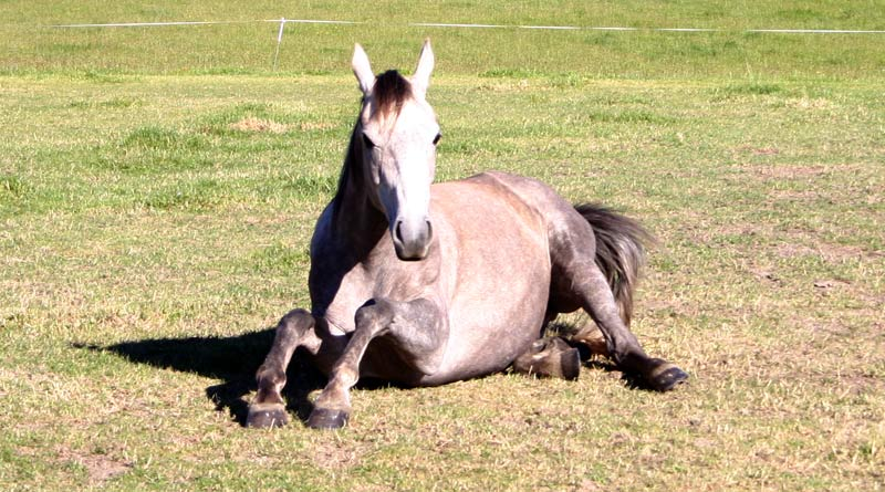 Detecting when a horse is behaving normally or not can be the difference between life and death.