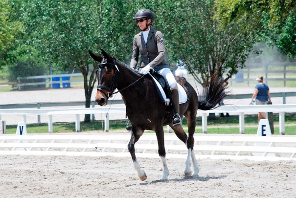 Slate the dressage mule, with Grand Prix level dressage rider and trainer Vicky Busch.