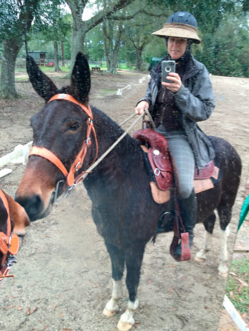 """Slate admires himself in the arena mirror, all decked out in his cowboy outfit. """"He's an awesome trail mule so we have to have the appropriate get-up,"""" owner Vicky Busch says."""