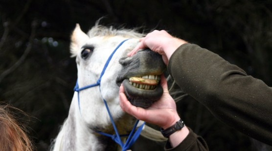 Scans Provide Extra Insights Into The Composition Of Horse Teeth