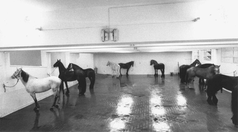 Jannis Kounellis, Untitled (12 Horses), 1969. Courtesy the artist and Gavin Brown's enterprise, New York/Rome. Photo: Claudio Abate
