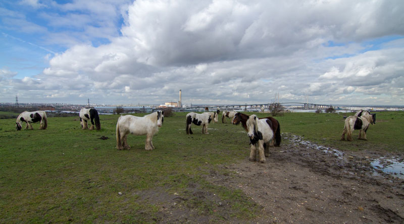 A group of horses left to fend for themselves in Dartford. © World Horse Welfare