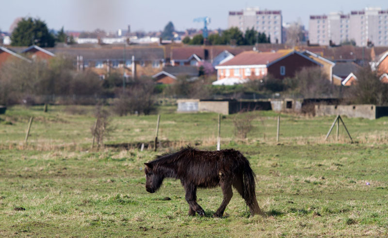 A horse fly-grazing in Dartford. © World Horse Welfare