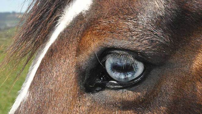 Making eye contact is the least we can do for our horses, suggests Laura Williams.
