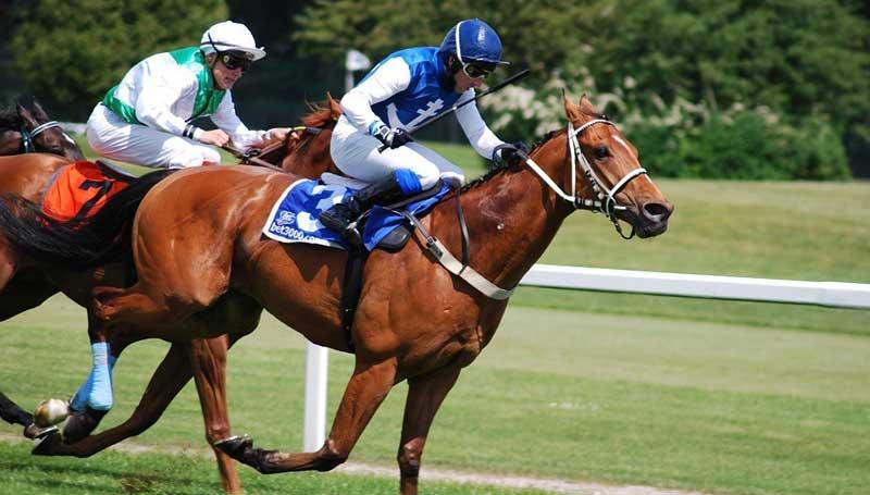 racehorse-uni-melb-800x445