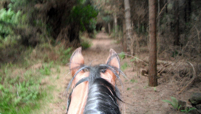 Adventures await those prepared to explore the world on horseback, but good preparation is essential. Photo: File