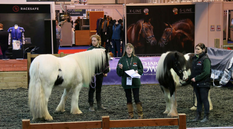 Two success stories from Hope Springs: Bessie and Bobbie at the BETA International equestrian trade show in Birmingham.