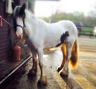 Bessie is now a picture of good health after care from the Hope Pastures team.
