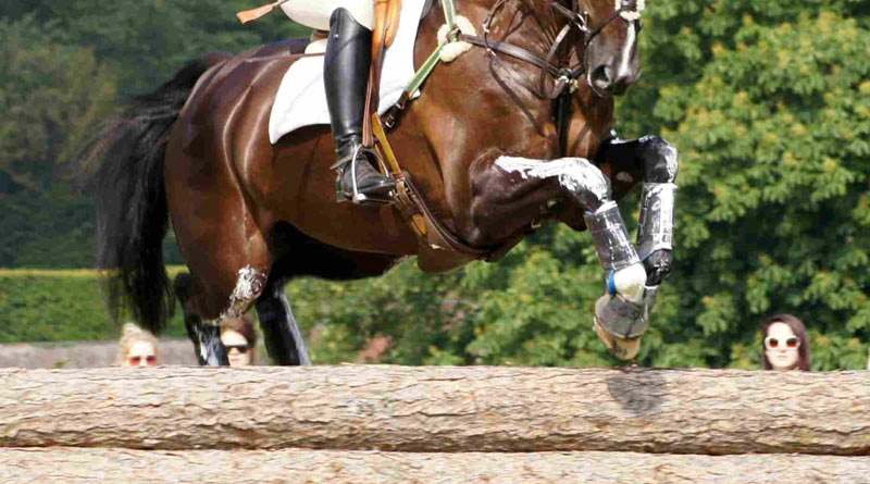 Researchers are investigating factors that affect the gut health of Eventing horses in the US. Photo: © Mike Bain