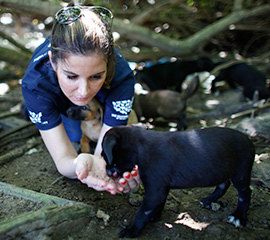 The HSUS's Tara Loller feeds puppies found near Playa Los Machos in Ceiba, PR.