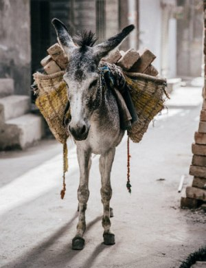 More than 500,000 animals work in the brick kiln industry.