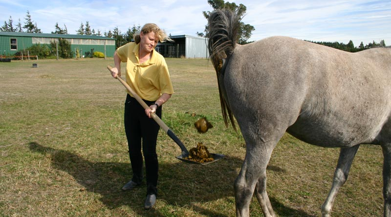 """Special delivery : So-called """"horse apples"""" are easy to deal with when not delivered in a watery mix."""