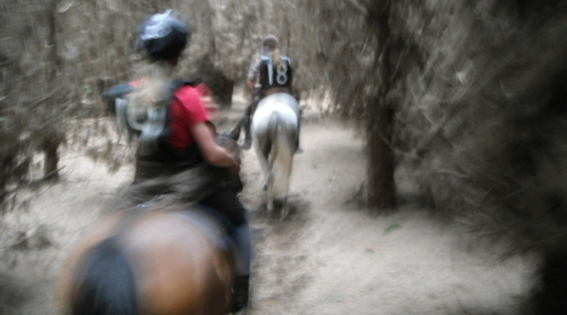 American endurance officials have laid out a series of concerns in a letter to the US Equestrian Federation. Photo: File