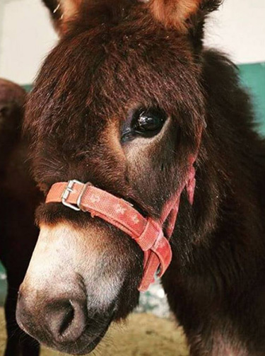 """Donkey foal Massun, who was found abandoned in Jordan, has been voted by the public as the cutest Spana animal of 2016. """"All animals are beautiful to us, but we think Massun's gorgeous eyes clinched it for her,"""" the charity said."""