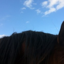 Rescuing the rescue horses: When good intentions go bad